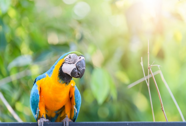 Macaw parrot on nature background