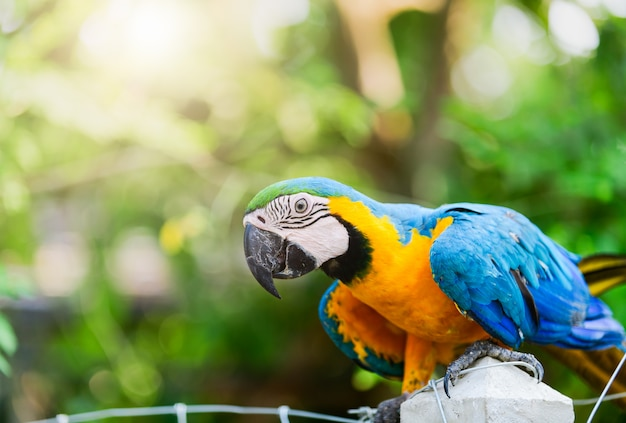 Macaw parrot on nature