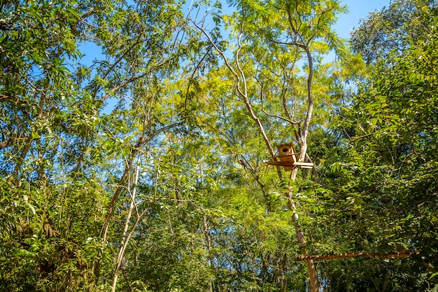 ホンジュラスのコパンルイナスの木のコンゴウインコの木の家