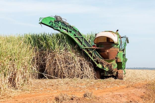 サトウキビ農園の機械収穫