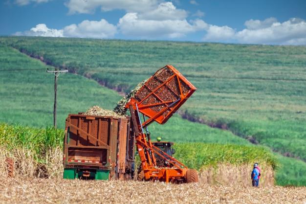 Машинная уборка плантации сахарного тростника.