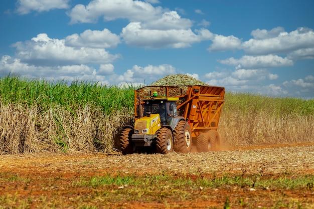 Машина для уборки плантации сахарного тростника