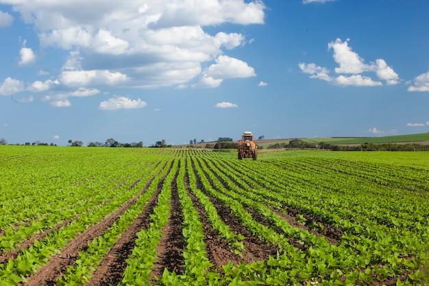 Машина работает на арахисовом поле под голубым небом. сельское хозяйство.