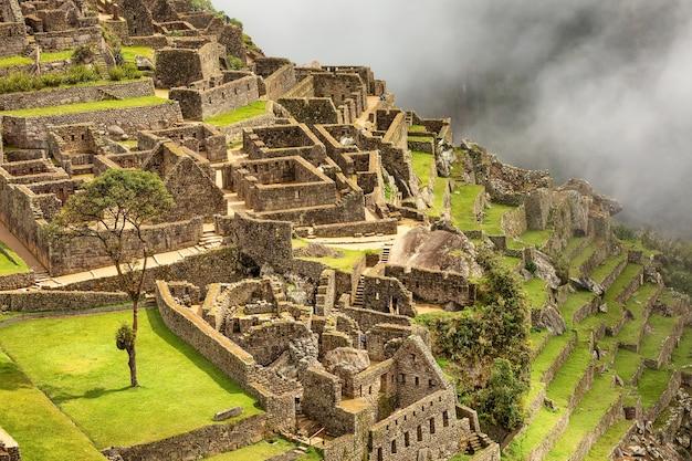 マチュピチュインカの街の遺跡とアンデスクスコペルーの木
