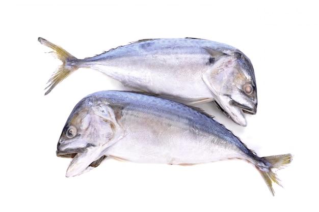 Mackerel fish isolated on white