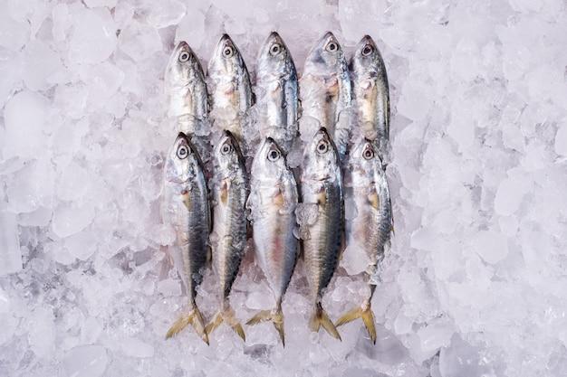 고등어 바다 소매 도매 해산물에 도매 생선 산업 냉동