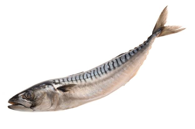 Mackerel on white