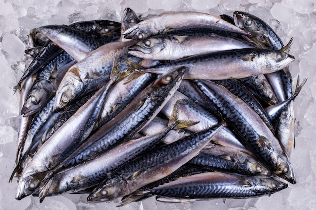 고등어 도매 생선 산업 유통 소매 해산물 수입 수출 비즈니스 생선 냉동