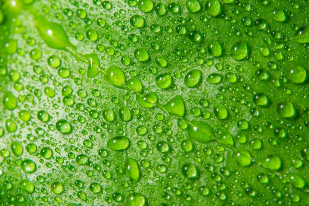 녹색 잎에 매크로 배경 삭제