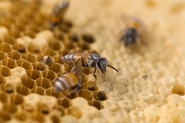 マクロ蜂とハニカムの性質
