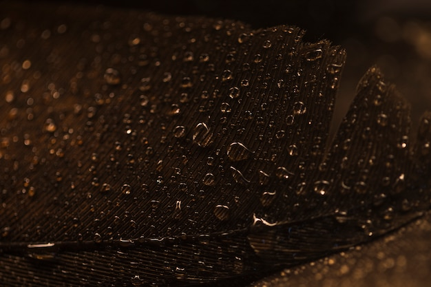 Macro of brown feather surface with transparent water drops