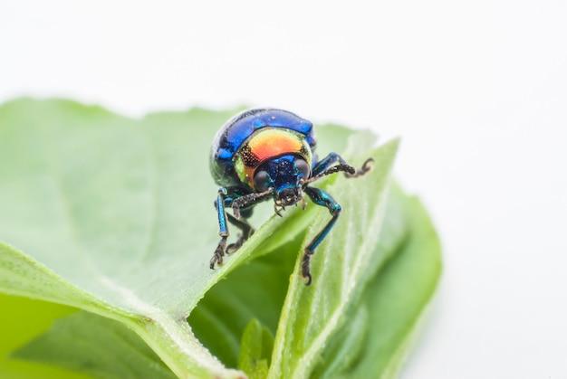 Macro bug colorful on green leaf