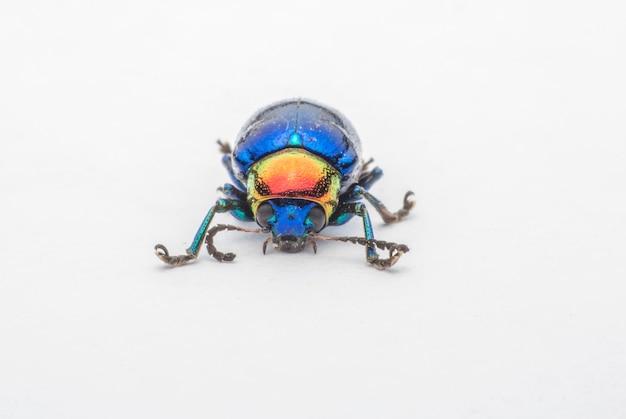Macro  bug colorful on white background