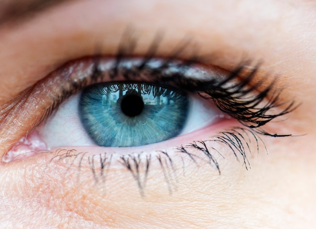 Macro closeup of human blue eye