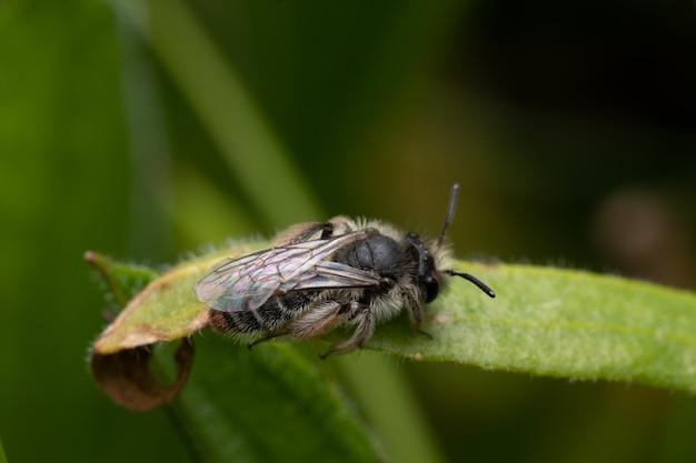 녹색 잎에 꿀벌의 근접 매크로 촬영