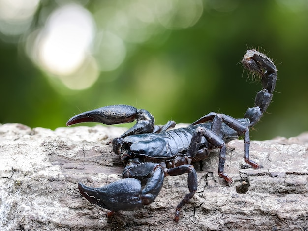 Macro closeup of a scorpion on timber in nature.