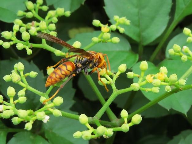 Macro closeup shot of a hornet on leaf buds