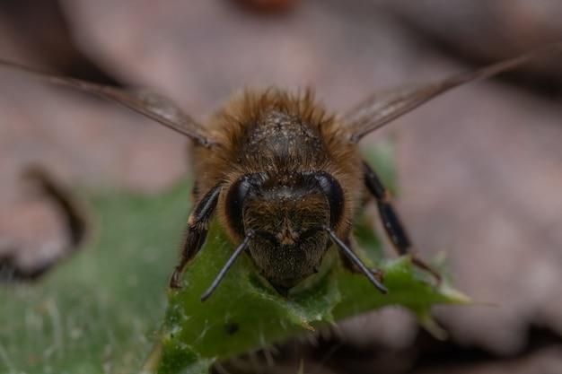 녹색 잎에 꿀벌의 매크로 근접 촬영 샷