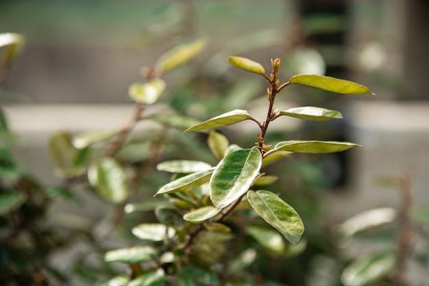 봄에 새 잎의 매크로 세부 사항