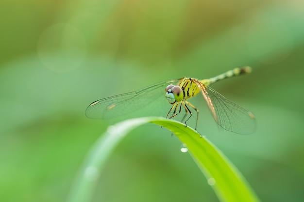 Макро стрекоза в природе на зеленом размытом фоне