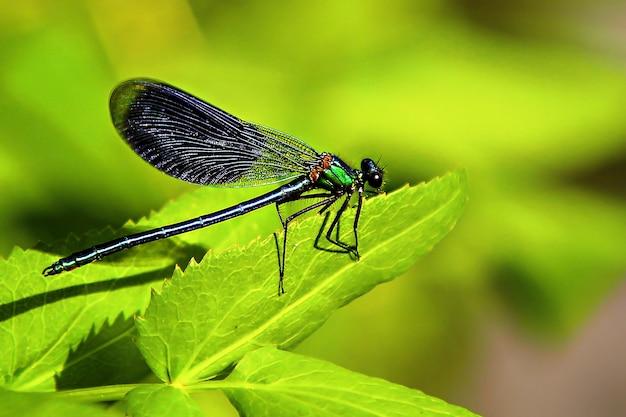 Macro dragonfly sitting on a leaf