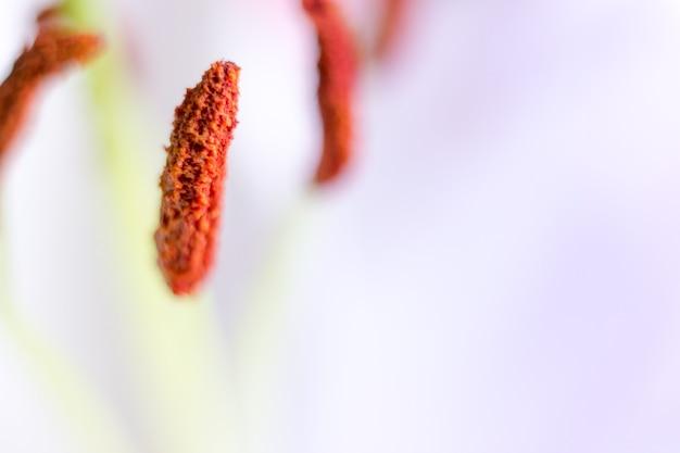 Макро цветок цветок с капелькой воды. абстрактная природа размытый фон. красивый макросъемки с нежным влажным цветком. фото высокого качества