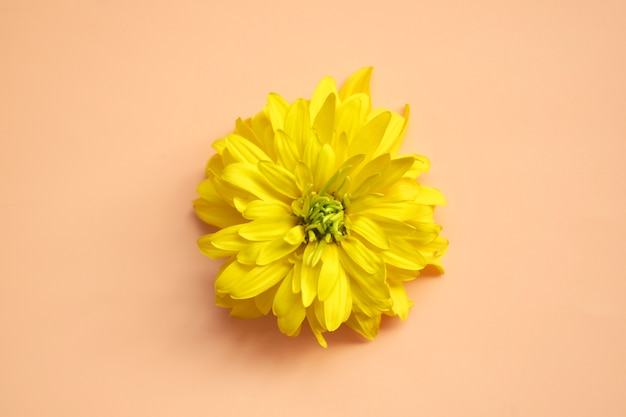 マクロの花。テキストのための場所で自然な背景。