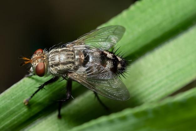 Macro fly on green leaf