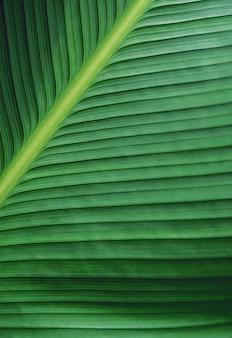 マクロの緑の葉のテクスチャ背景
