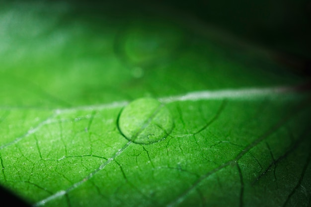 Macro of a green leaf