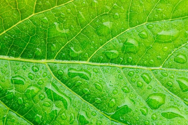 Макро зеленые листья и капли воды