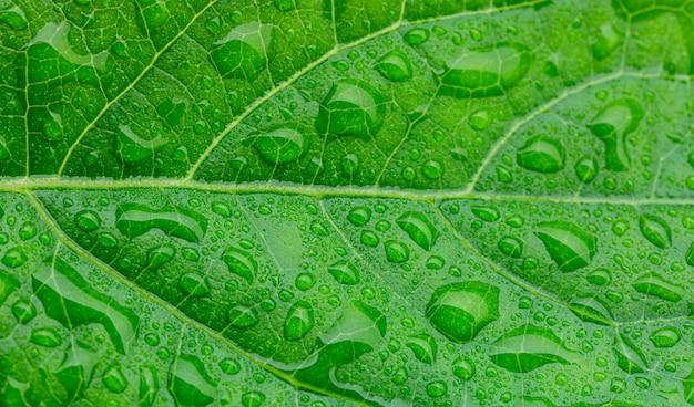 매크로 녹색 잎과 물방울녹색 잎에 물방울이 있는 사진을 닫습니다