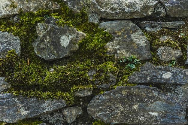Macro green moss among old rough stones