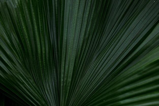 マクロ緑のヤシの葉の背景