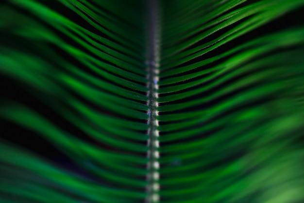Macro of a green tropical leaf