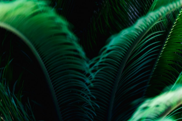 Macro of a green tropical leaf