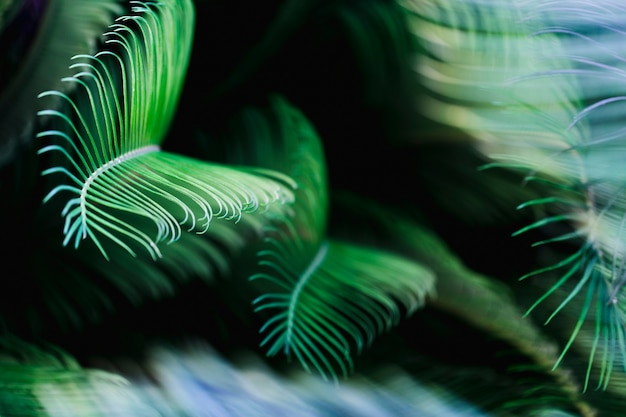 Macro of green tropical leaves