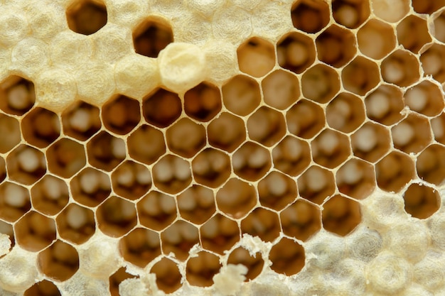 Macro of honeycomb, background hexagon texture,