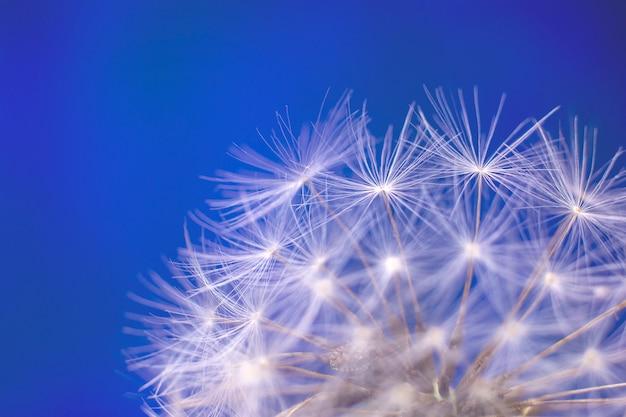 Macro image of dandelion spores.