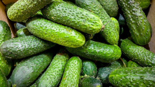 Macro image of lots of green cucumbers on counter at grocery store. closeup texture or pattern of fresh ripe vegetables