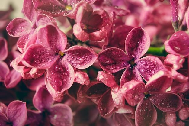물방울, 꽃 배경, 봄 배경으로 피는 라일락 보라색 꽃의 매크로 이미지