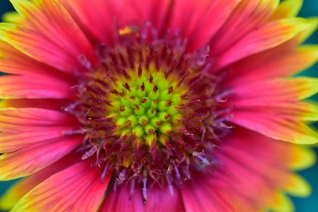 花テンニンギクのマクロ画像、上面図。