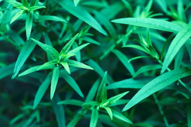 緑の葉のマクロ画像。緑の葉は、抽象的な自然の背景をトーンダウンします。セレクティブフォーカス。