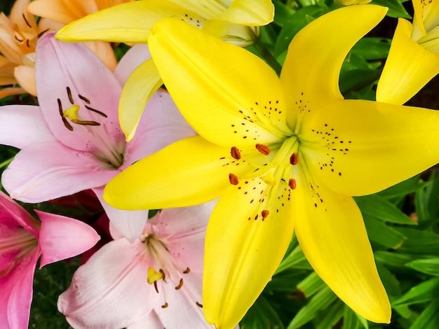 庭に咲くリリーの花のおしべとめしべのマクロ画像。花の美しい背景 Premium写真