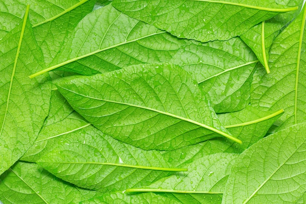 빗방울 이슬이 있는 녹색 잎으로 만든 매크로 잎배경 텍스처