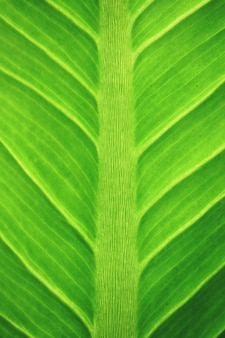 Macro leaves background texture