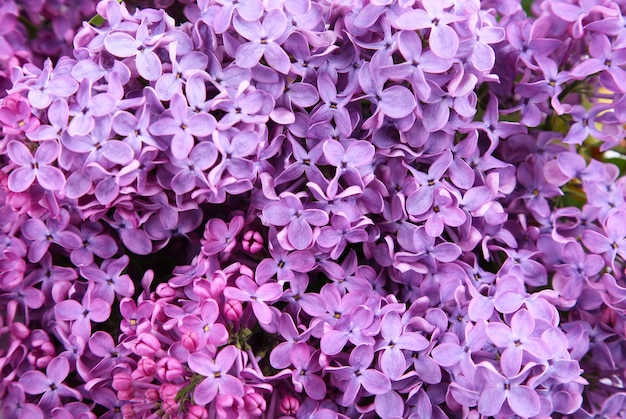 Macro of lilac purple flowers in the spring day