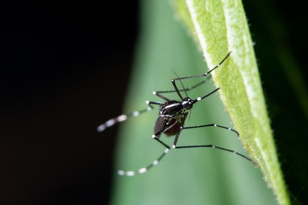 Макро, комар на листьях