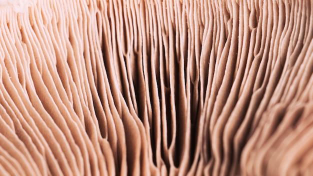Macro mushroom texture