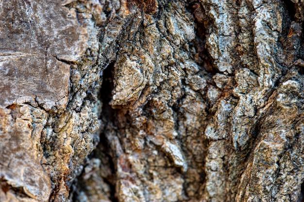 올리브 나무 껍질의 매크로